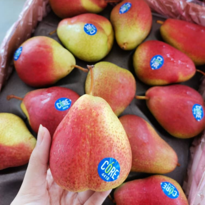 South Africa Forella Pear [4pcs/Pack]